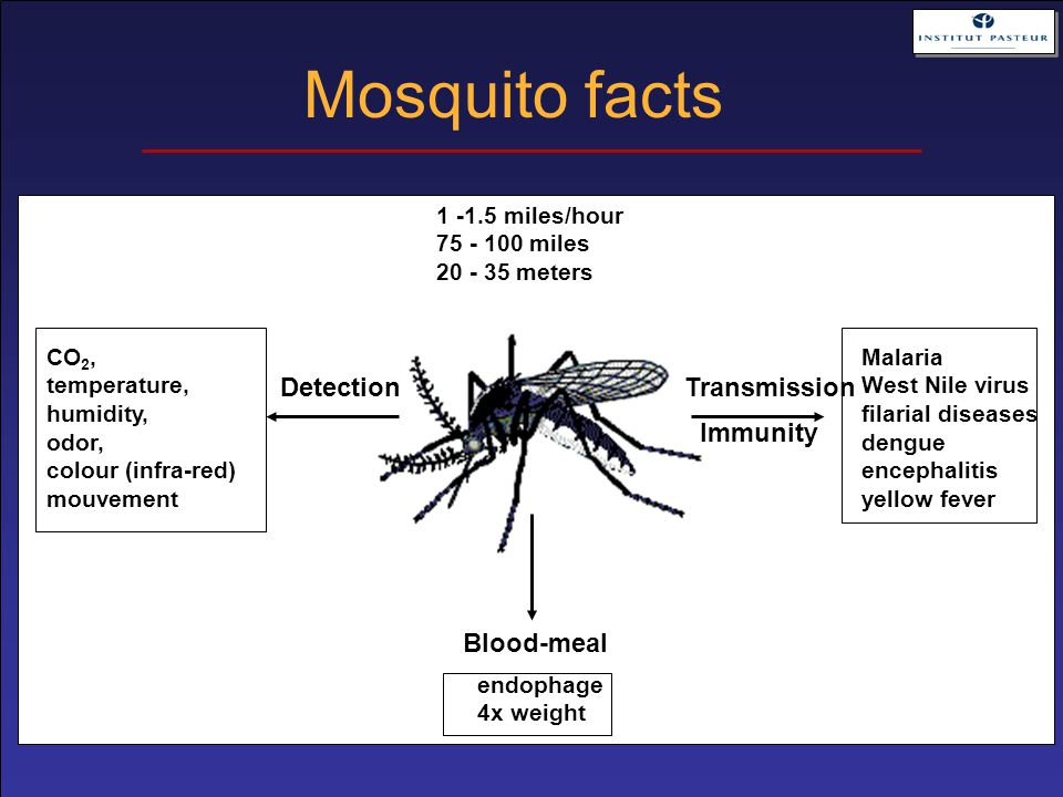 Mosquito facts CO 2, temperature, humidity, odor, colour (infra-red) mouvement Malaria West Nile virus filarial diseases dengue encephalitis yellow fe