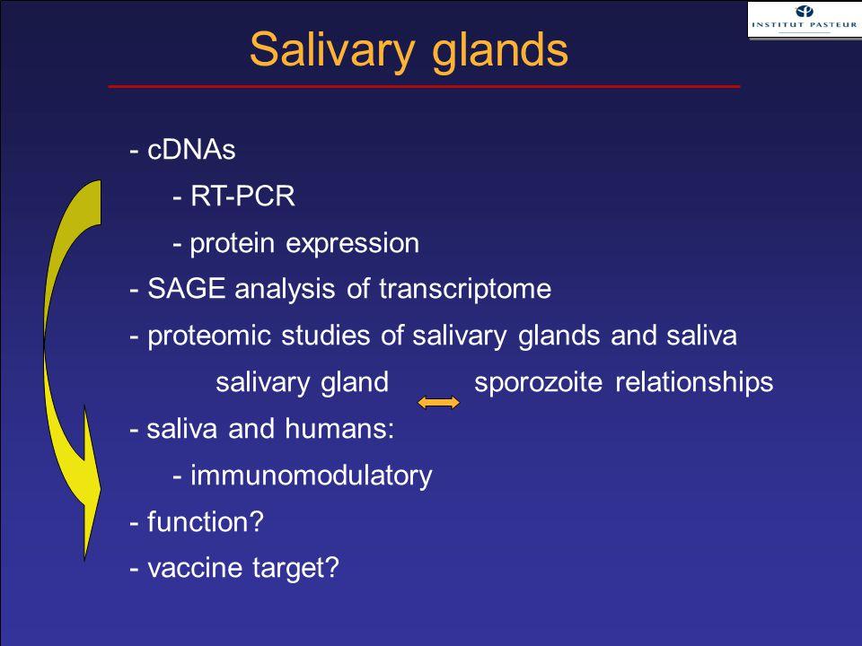 - cDNAs - RT-PCR - protein expression - SAGE analysis of transcriptome - proteomic studies of salivary glands and saliva salivary gland sporozoite rel