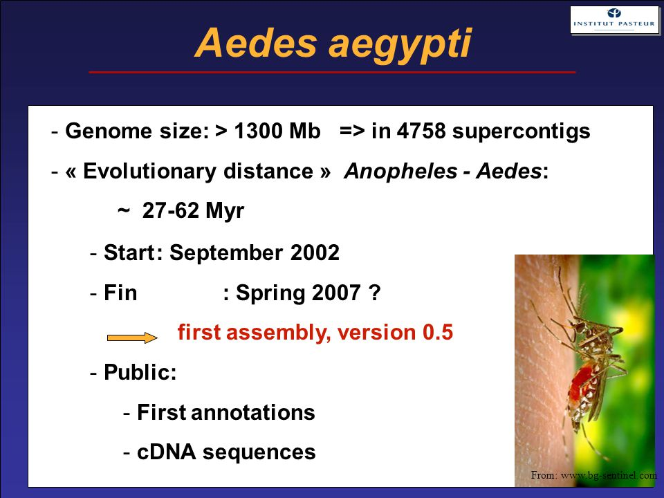 Aedes aegypti - Start: September 2002 - Fin : Spring 2007 .