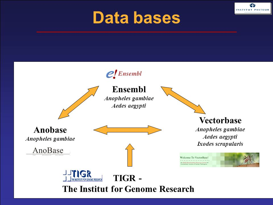Data bases Ensembl Anopheles gambiae Aedes aegypti Anobase Anopheles gambiae Vectorbase Anopheles gambiae Aedes aegypti Ixodes scrapularis TIGR - The