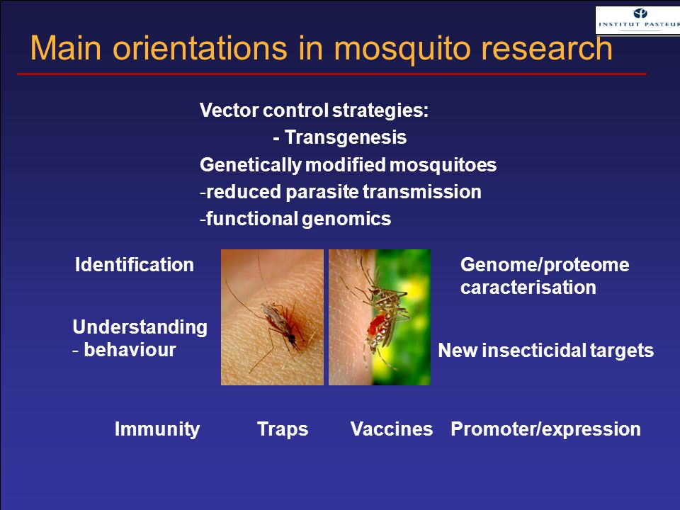 Traps Identification Understanding - behaviour Genome/proteome caracterisation Promoter/expression Vector control strategies: - Transgenesis Genetically modified mosquitoes -reduced parasite transmission -functional genomics New insecticidal targets Vaccines Main orientations in mosquito research Immunity