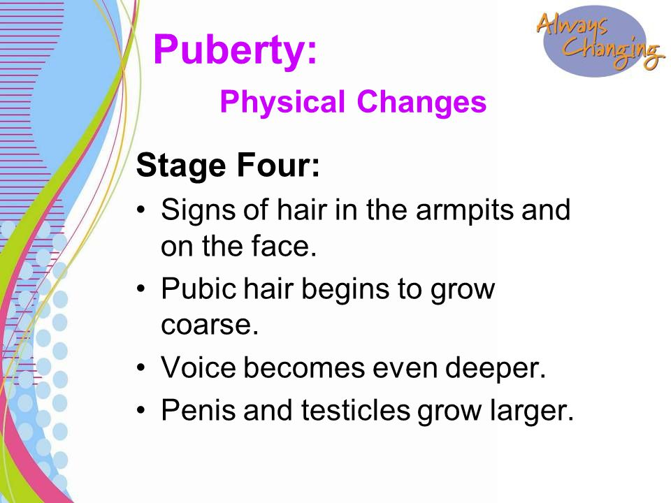 Stage Four: Signs of hair in the armpits and on the face. Pubic hair begins to grow coarse. Voice becomes even deeper. Penis and testicles grow larger