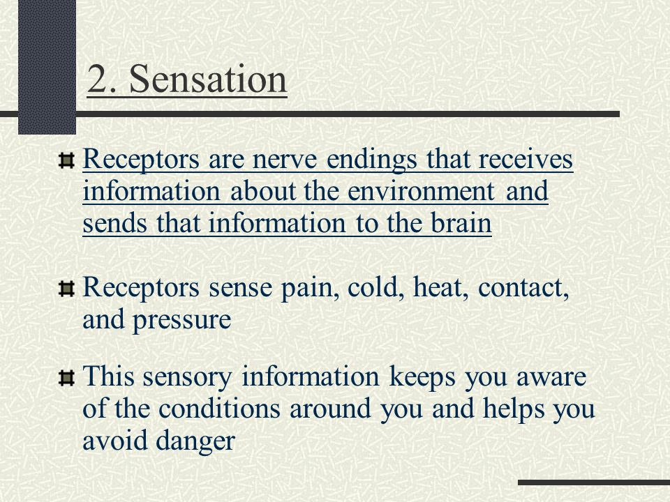 2. Sensation Receptors are nerve endings that receives information about the environment and sends that information to the brain Receptors sense pain,