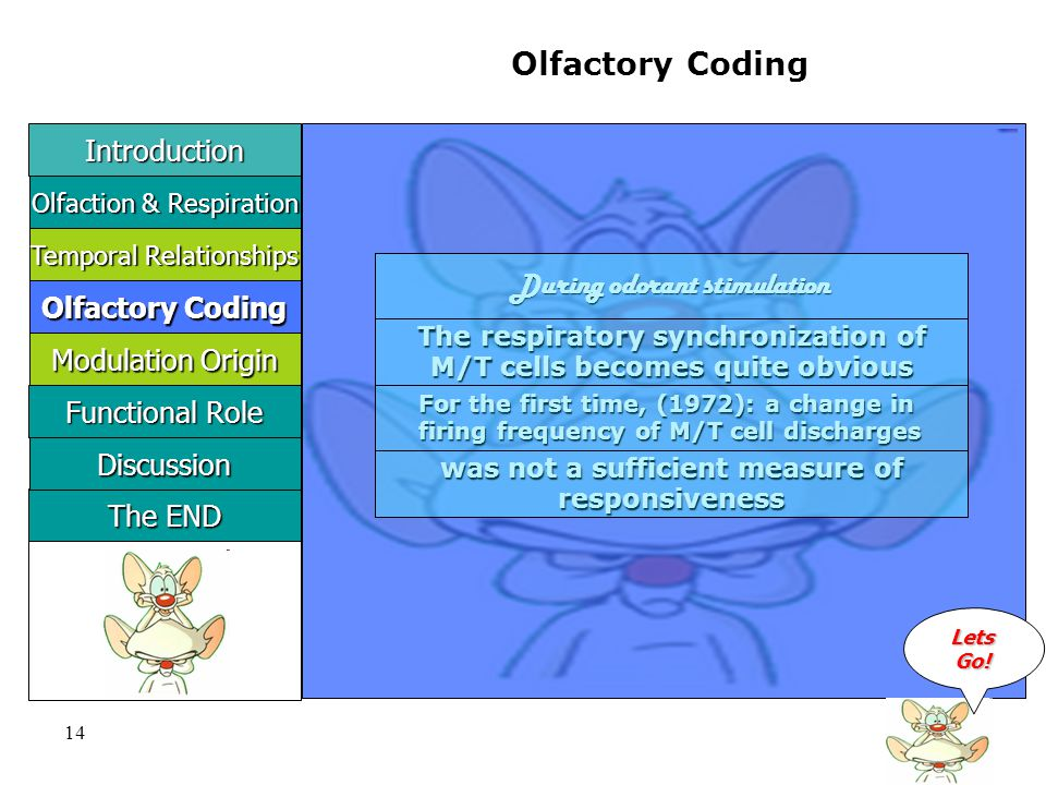 14 Olfactory Coding During odorant stimulation The respiratory synchronization of M/T cells becomes quite obvious For the first time, (1972): a change in firing frequency of M/T cell discharges was not a sufficient measure of responsiveness Introduction LLLL eeee tttt ssss GGGG oooo !!!.