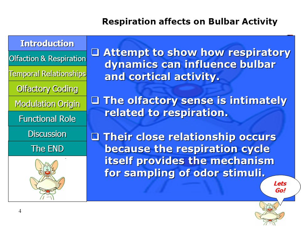 5 Olfaction & Respiration Olfaction & Respiration Introduction Respiration affects on Bulbar Activity The END The END Discussion  The mammalian olfactory bulb is characterized by prominent characterized by prominent oscillatory activity of its local oscillatory activity of its local field potentials.