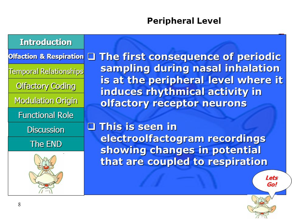 8 Peripheral Level  The first consequence of periodic sampling during nasal inhalation sampling during nasal inhalation is at the peripheral level where it is at the peripheral level where it induces rhythmical activity in induces rhythmical activity in olfactory receptor neurons olfactory receptor neurons  This is seen in electroolfactogram recordings electroolfactogram recordings showing changes in potential showing changes in potential that are coupled to respiration that are coupled to respiration LLLL eeee tttt ssss GGGG oooo !!!.