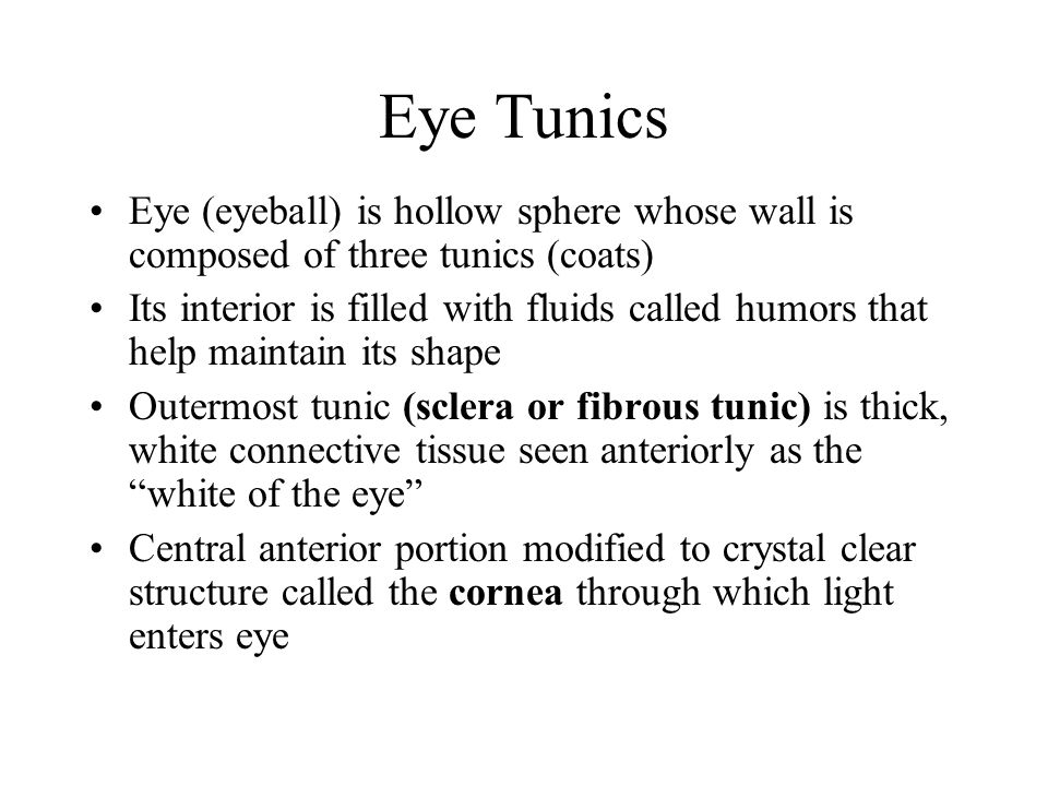 Eye Tunics Eye (eyeball) is hollow sphere whose wall is composed of three tunics (coats) Its interior is filled with fluids called humors that help ma