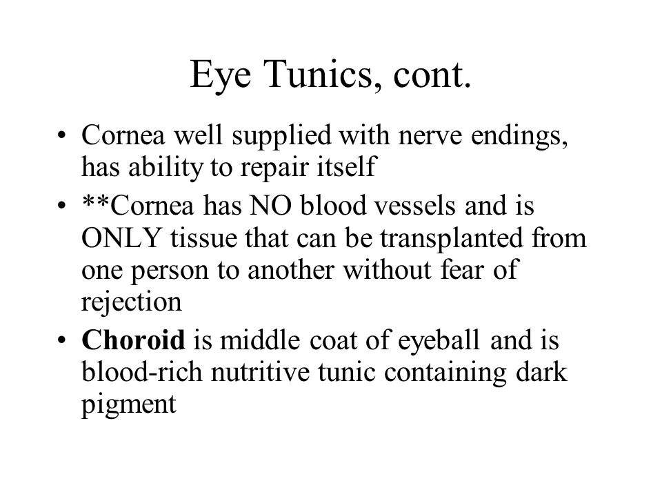 Eye Tunics, cont. Cornea well supplied with nerve endings, has ability to repair itself **Cornea has NO blood vessels and is ONLY tissue that can be t