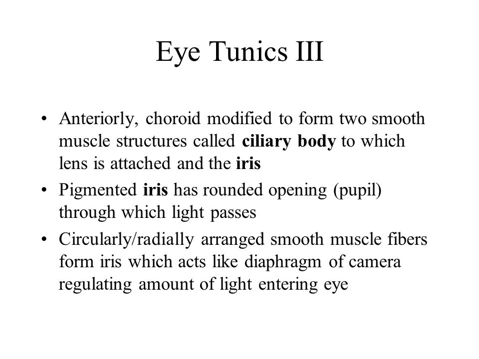 Eye Tunics III Anteriorly, choroid modified to form two smooth muscle structures called ciliary body to which lens is attached and the iris Pigmented