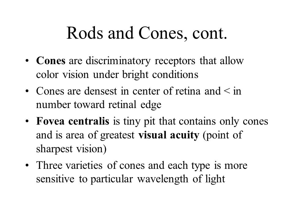Rods and Cones, cont. Cones are discriminatory receptors that allow color vision under bright conditions Cones are densest in center of retina and < i
