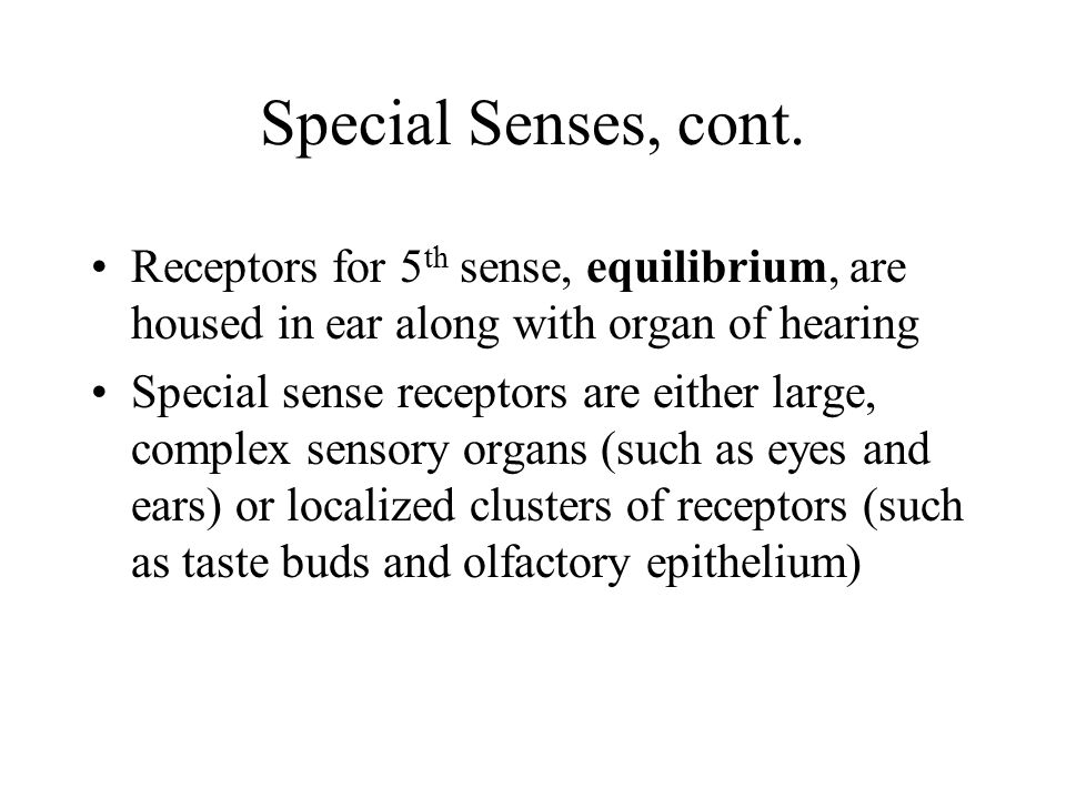 Special Senses, cont. Receptors for 5 th sense, equilibrium, are housed in ear along with organ of hearing Special sense receptors are either large, c