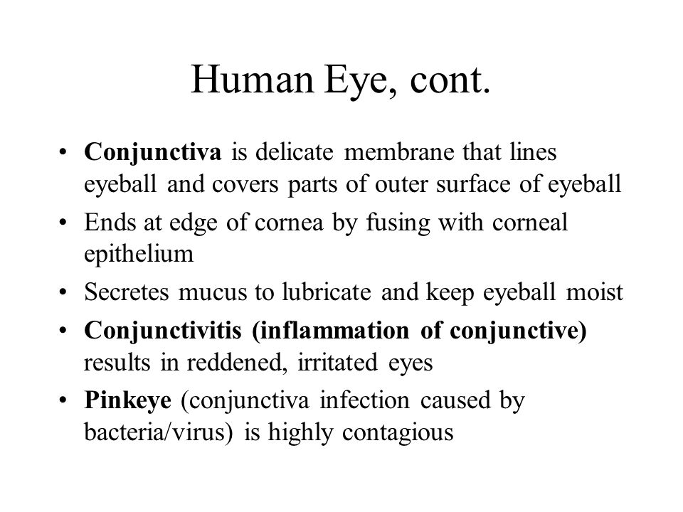 Human Eye III Lacrimal apparatus consists of number of glands and ducts that drain lacrimal secretions into nasal cavity Lacrimal glands located above lateral end of each eye release dilute salt solution (tears) onto anterior surface of eyeball through lacrimal gland ducts