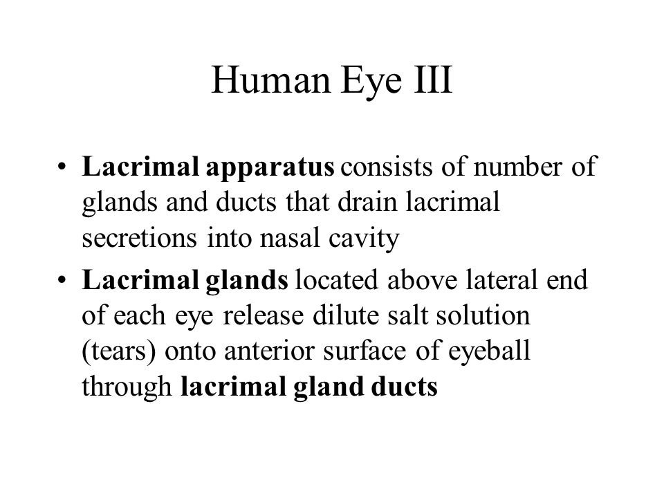 Human Eye III Lacrimal apparatus consists of number of glands and ducts that drain lacrimal secretions into nasal cavity Lacrimal glands located above