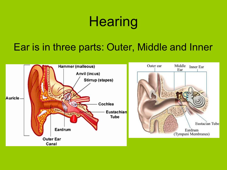 Hearing Ear is in three parts: Outer, Middle and Inner