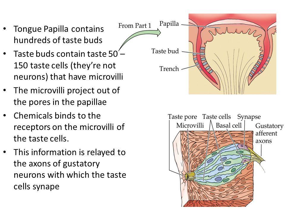 How does taste get into the taste cells.