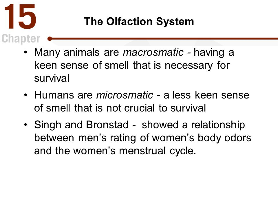 The Olfaction System Many animals are macrosmatic - having a keen sense of smell that is necessary for survival Humans are microsmatic - a less keen sense of smell that is not crucial to survival Singh and Bronstad - showed a relationship between men ' s rating of women ' s body odors and the women ' s menstrual cycle.