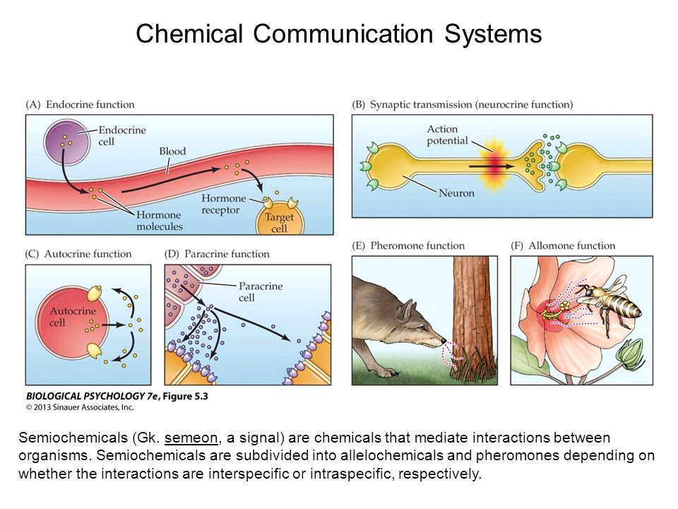 Chemical Communication Systems Semiochemicals (Gk.