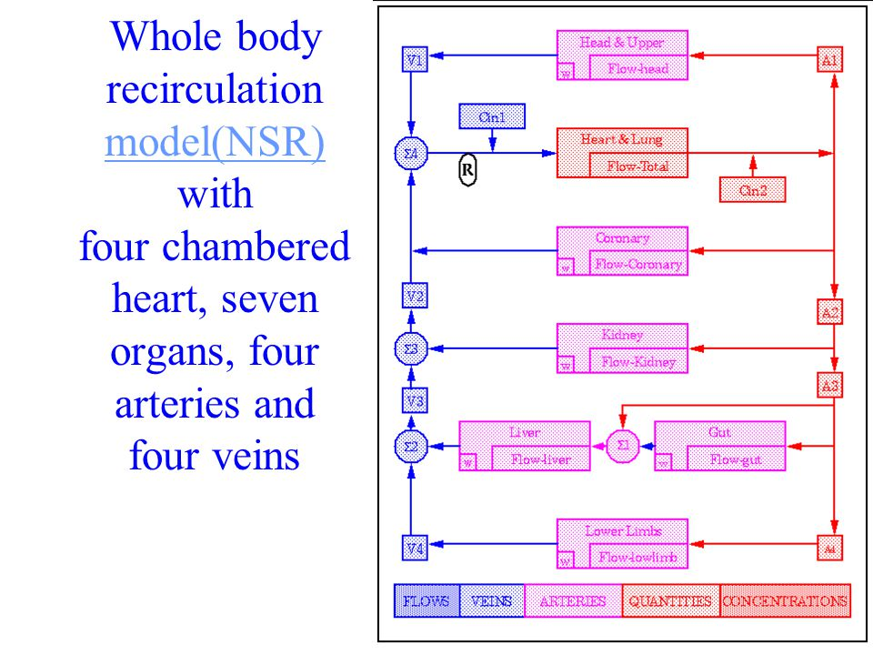 20 Whole body recirculation model(NSR) with four chambered heart, seven organs, four arteries and four veins model(NSR)