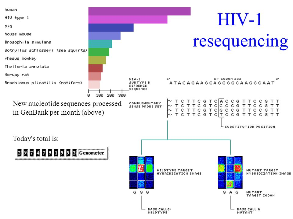 31 HIV-1 resequencing New nucleotide sequences processed in GenBank per month (above) Today s total is:
