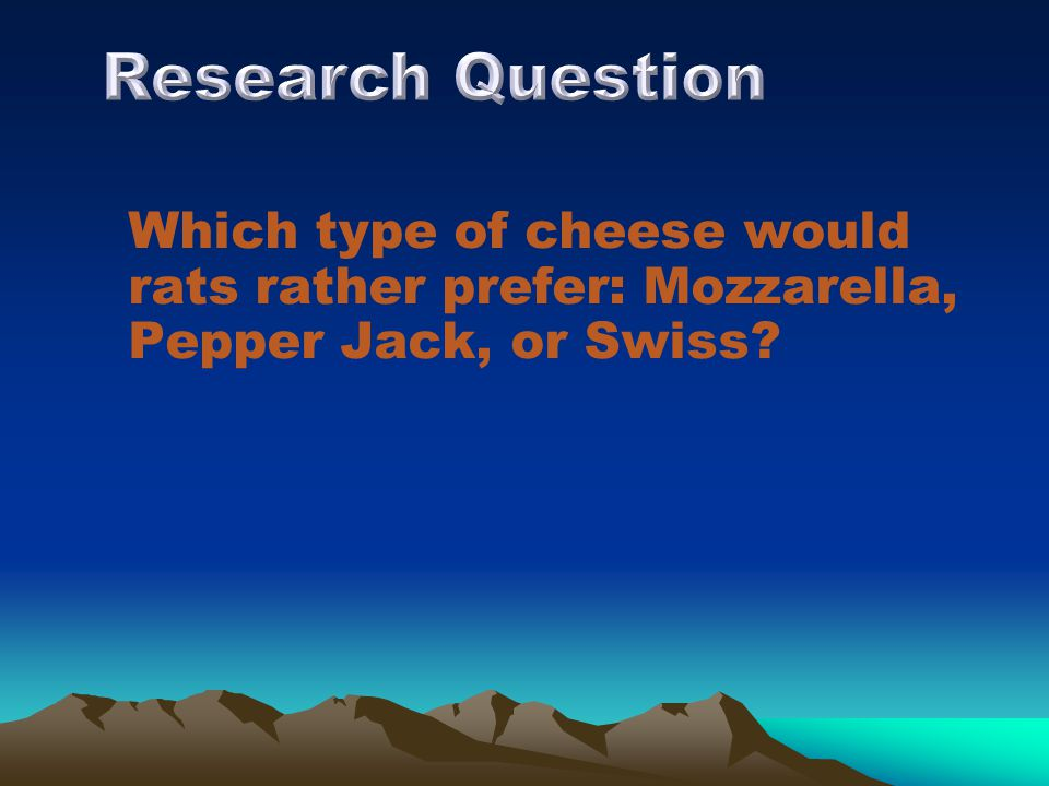 Which type of cheese would rats rather prefer: Mozzarella, Pepper Jack, or Swiss