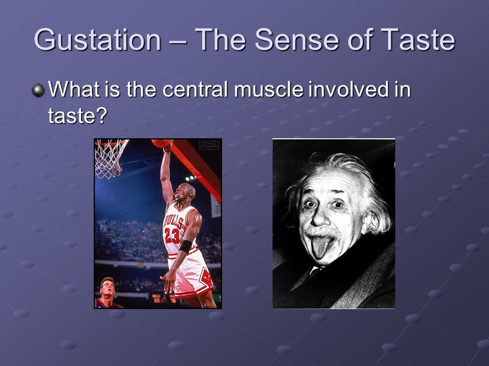 Gustation – The Sense of Taste What is the central muscle involved in taste