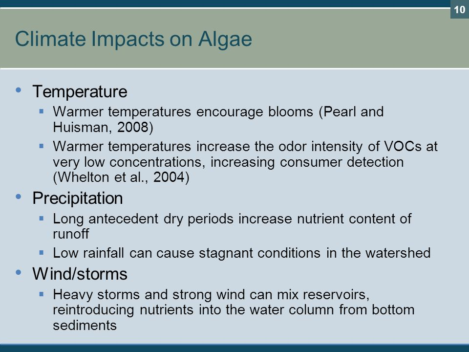 Climate Impacts on Algae Temperature  Warmer temperatures encourage blooms (Pearl and Huisman, 2008)  Warmer temperatures increase the odor intensit
