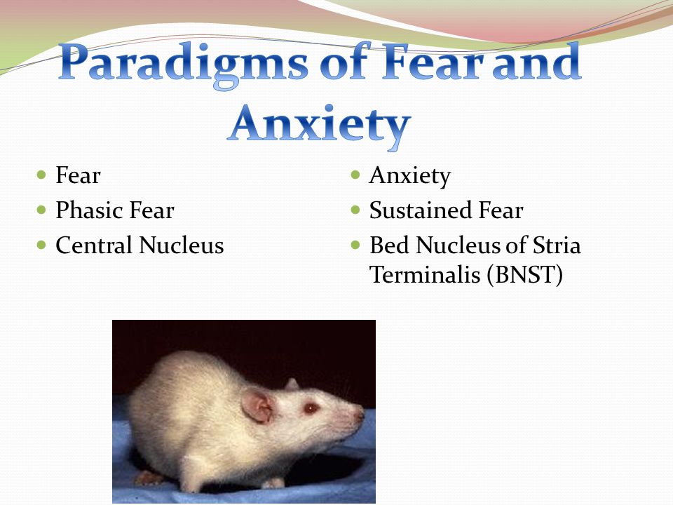 Fear Phasic Fear Central Nucleus Anxiety Sustained Fear Bed Nucleus of Stria Terminalis (BNST)