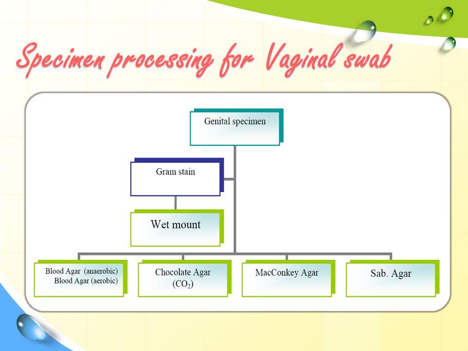 Specimen processing for Vaginal swab