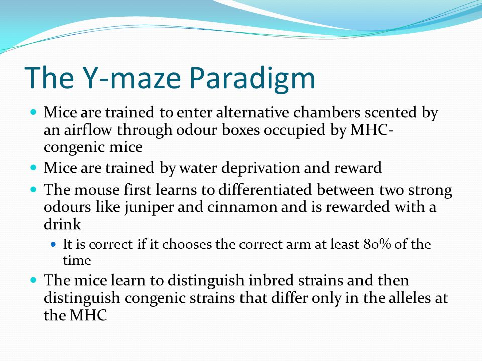 The Y-maze Paradigm Mice are trained to enter alternative chambers scented by an airflow through odour boxes occupied by MHC- congenic mice Mice are t