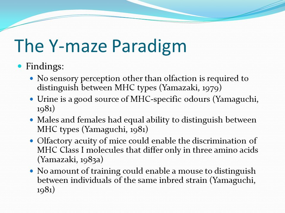 The Y-maze Paradigm Findings: No sensory perception other than olfaction is required to distinguish between MHC types (Yamazaki, 1979) Urine is a good