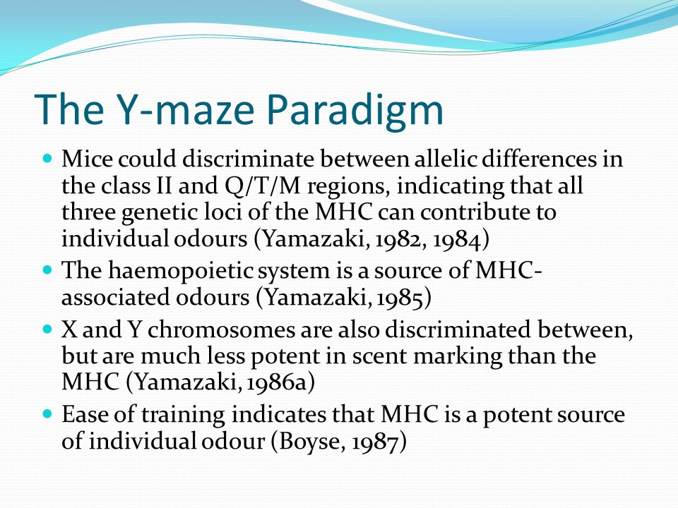 The Y-maze Paradigm Mice could discriminate between allelic differences in the class II and Q/T/M regions, indicating that all three genetic loci of t