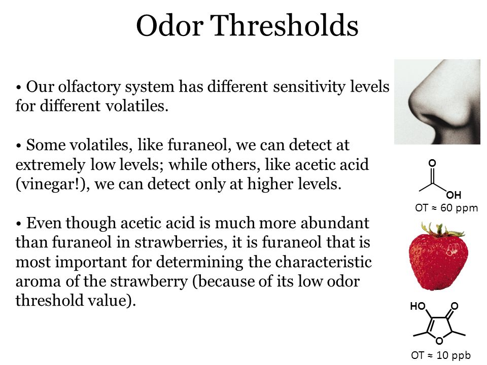 Odor Thresholds Our olfactory system has different sensitivity levels for different volatiles.