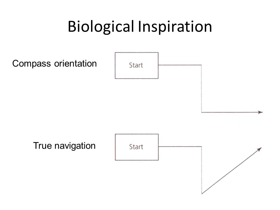 Biological Inspiration Visual sensing  Landmarks (objects, mountains, lakes) Olfactory cues  Indentify home, track food source or home Sun compass  Orientation with respect to the sun (requires internal clock) Magnetic compass  Earth's magnetic field (polarity & gradients) Star compass  Orientation with respect to the stars at night (e.g., North Star or Polaris) Dead reckoning  Record the distances and directions travelled from the home point Memory  Memorize specific gradients or landmarks near their home base Some Important components for navigation