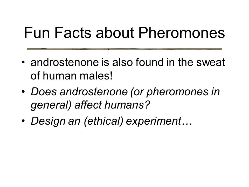 androstenone is also found in the sweat of human males.