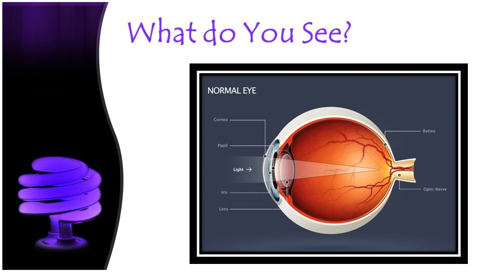 The Eye The Image The Parts -The Eye: The Visionary Sensory Organ -Contains the sensory receptors to detect light -Cornea – transparent covering on the surface of the eye -Iris – Muscle surrounding pupil; adjust to permit entry of light – adjustment is a reflex -Pupil – size of opening is controlled by iris