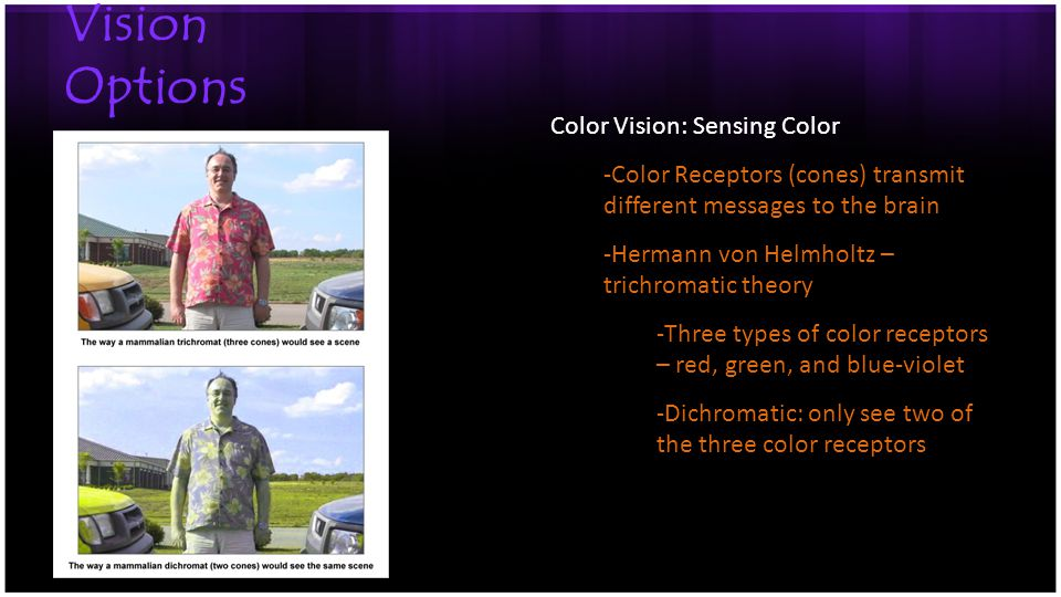 Vision Options Color Vision: Sensing Color -Color Receptors (cones) transmit different messages to the brain -Hermann von Helmholtz – trichromatic theory -Three types of color receptors – red, green, and blue-violet -Dichromatic: only see two of the three color receptors