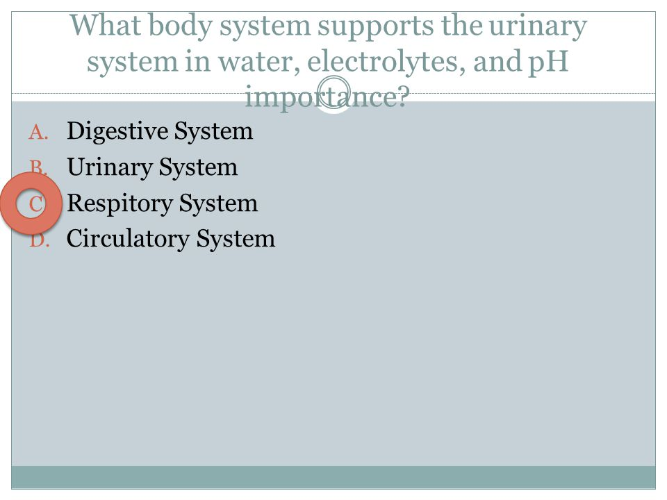 What body system supports the urinary system in water, electrolytes, and pH importance? A. Digestive System B. Urinary System C. Respitory System D. C