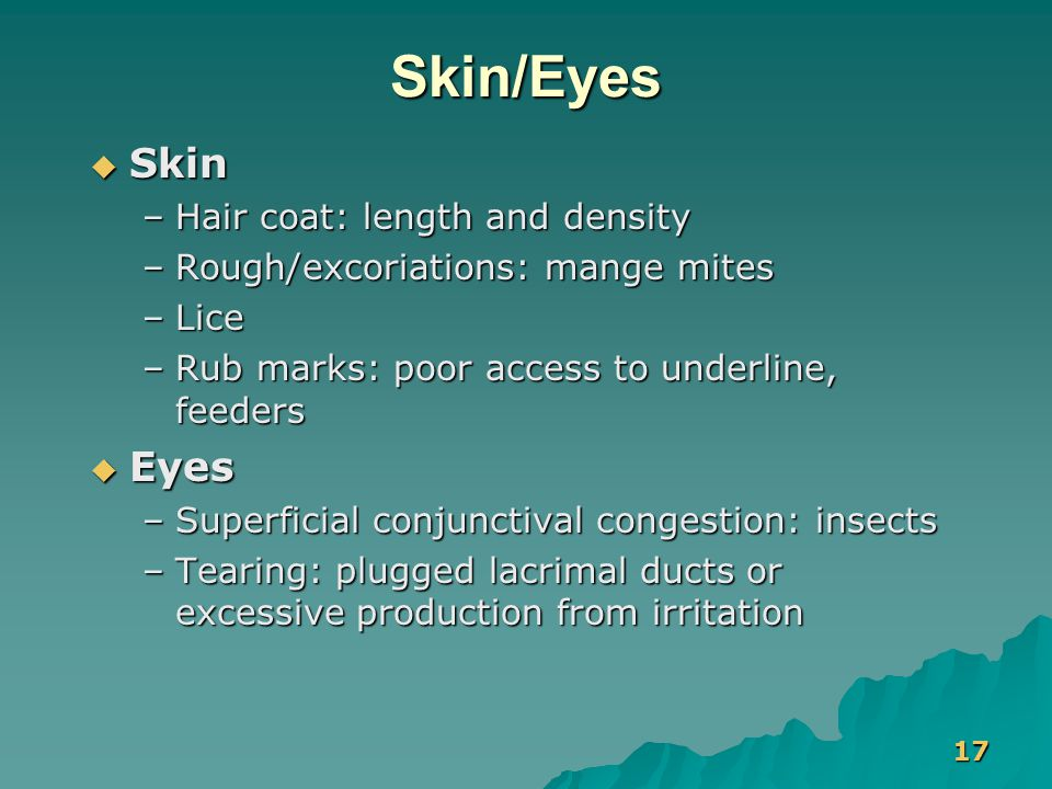 17 Skin/Eyes  Skin –Hair coat: length and density –Rough/excoriations: mange mites –Lice –Rub marks: poor access to underline, feeders  Eyes –Superf