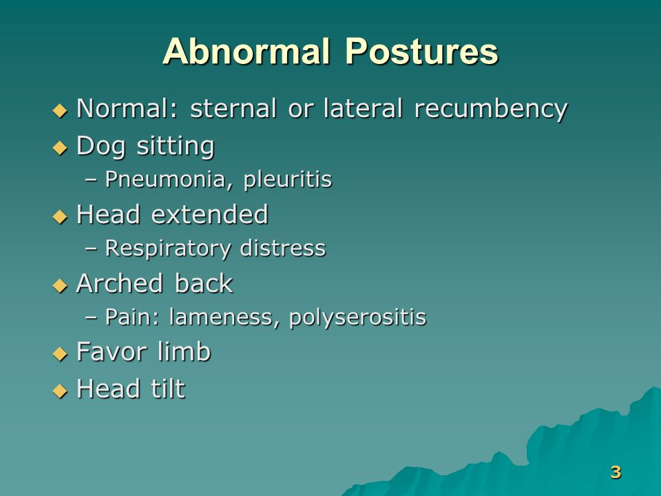 3 Abnormal Postures  Normal: sternal or lateral recumbency  Dog sitting –Pneumonia, pleuritis  Head extended –Respiratory distress  Arched back –P