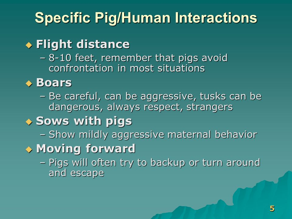 5 Specific Pig/Human Interactions  Flight distance –8-10 feet, remember that pigs avoid confrontation in most situations  Boars –Be careful, can be