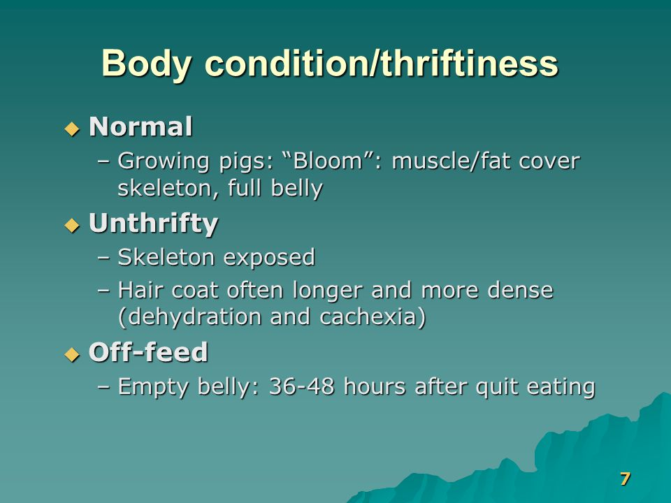 "7 Body condition/thriftiness  Normal –Growing pigs: ""Bloom"": muscle/fat cover skeleton, full belly  Unthrifty –Skeleton exposed –Hair coat often lon"
