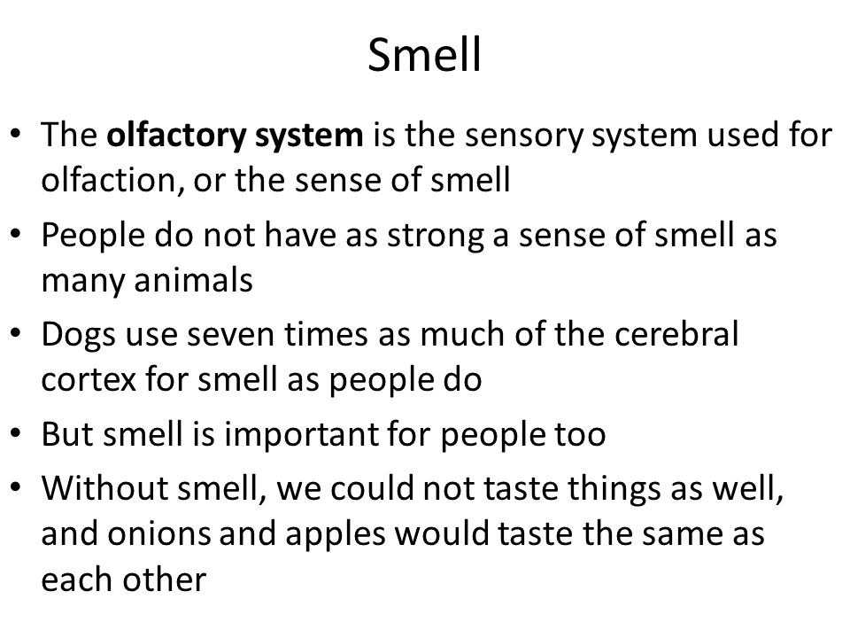 Smell The olfactory system is the sensory system used for olfaction, or the sense of smell People do not have as strong a sense of smell as many anima