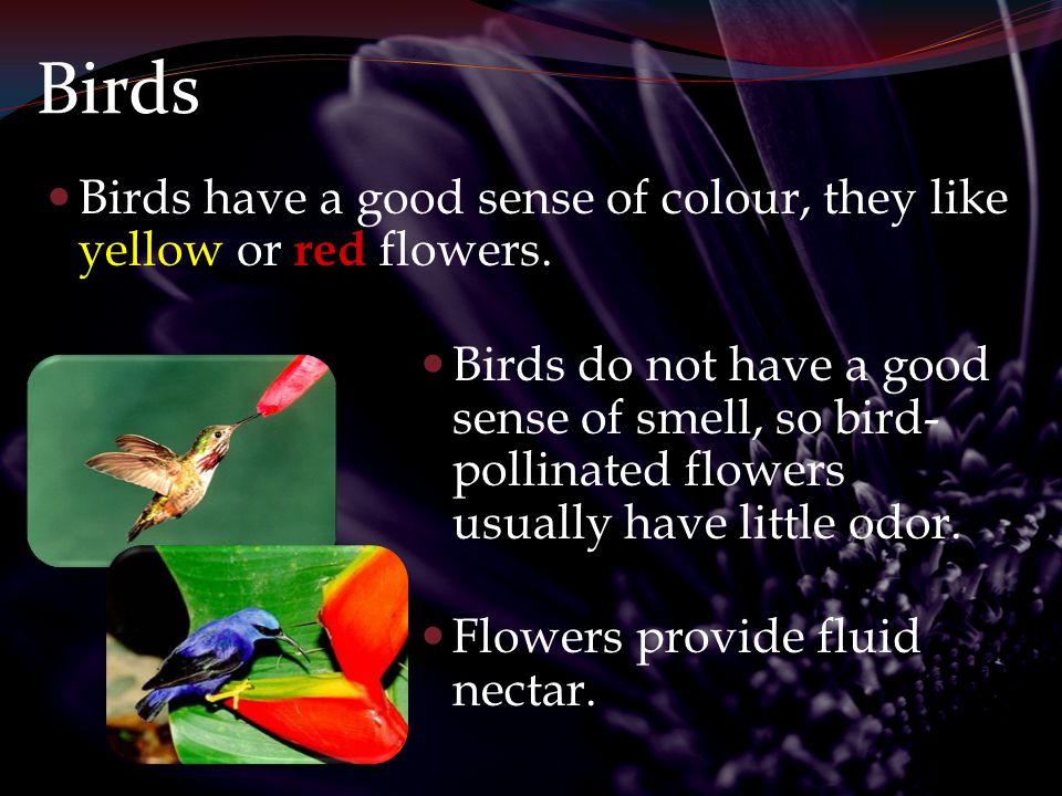 Birds Birds have a good sense of colour, they like yellow or red flowers.