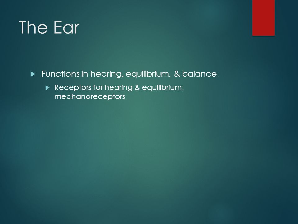 The Ear  Functions in hearing, equilibrium, & balance  Receptors for hearing & equilibrium: mechanoreceptors