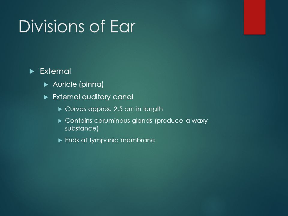 Divisions of Ear  External  Auricle (pinna)  External auditory canal  Curves approx.