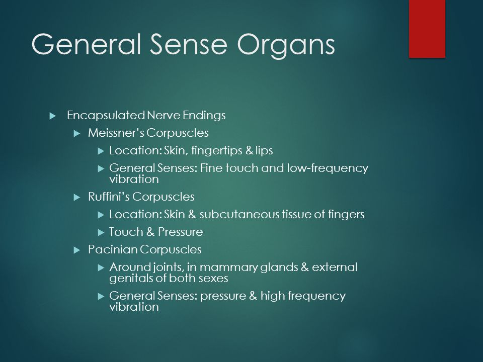 General Sense Organs  Encapsulated Nerve Endings  Meissner's Corpuscles  Location: Skin, fingertips & lips  General Senses: Fine touch and low-frequency vibration  Ruffini's Corpuscles  Location: Skin & subcutaneous tissue of fingers  Touch & Pressure  Pacinian Corpuscles  Around joints, in mammary glands & external genitals of both sexes  General Senses: pressure & high frequency vibration