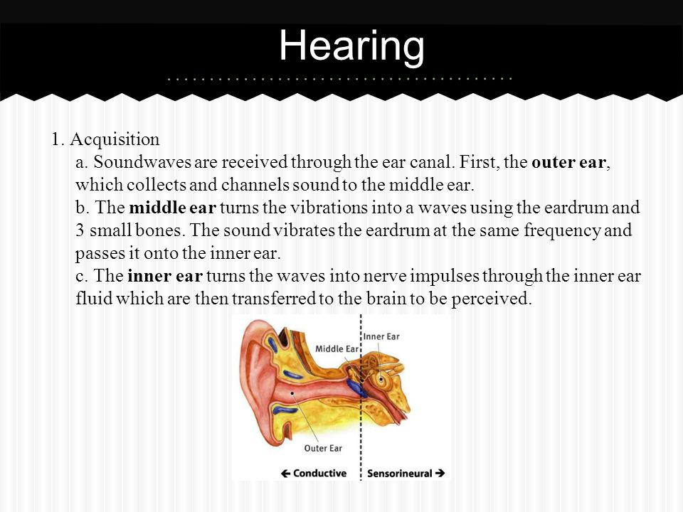 1. Acquisition a. Soundwaves are received through the ear canal. First, the outer ear, which collects and channels sound to the middle ear. b. The mid