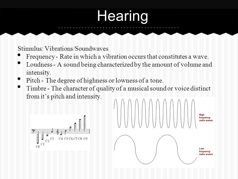 Stimulus: Vibrations/Soundwaves Frequency - Rate in which a vibration occurs that constitutes a wave. Loudness - A sound being characterized by the am