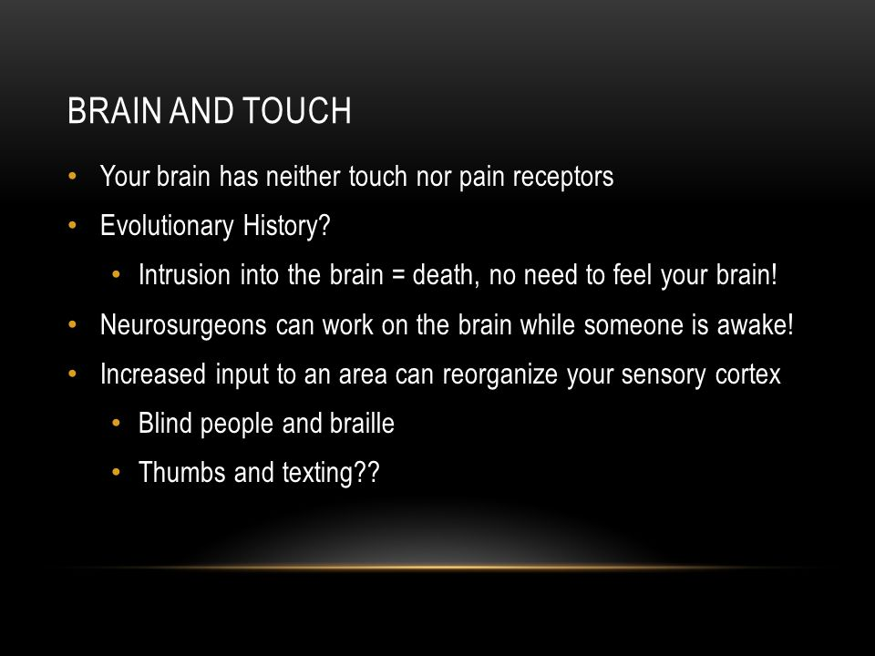 BRAIN AND TOUCH Your brain has neither touch nor pain receptors Evolutionary History.