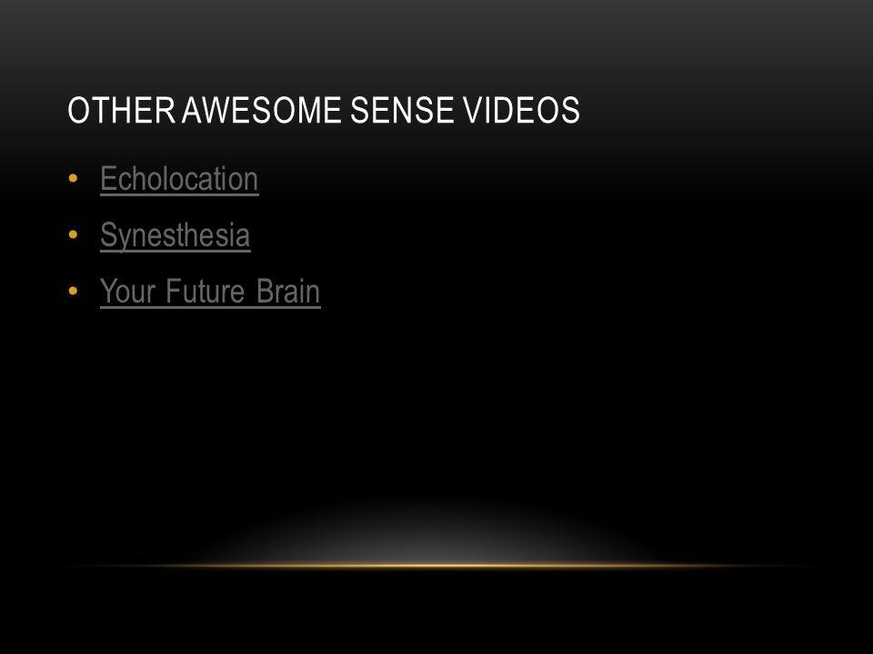 OTHER AWESOME SENSE VIDEOS Echolocation Synesthesia Your Future Brain